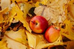 Todavía del otoño vida con las manzanas rojas Fotos de archivo libres de regalías