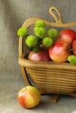 Todavía del otoño vida con las manzanas rojas y el crisantemo verde Imágenes de archivo libres de regalías