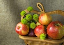 Todavía del otoño vida con las manzanas rojas y el crisantemo verde Fotos de archivo libres de regalías