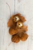 Todavía del otoño vida con las nueces Imagen de archivo libre de regalías