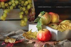 Todavía del otoño vida de manzanas y de hojas en una caja con las uvas verdes Foto de archivo