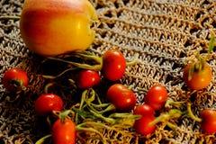 Todavía del otoño vida eglantine Fotografía de archivo libre de regalías