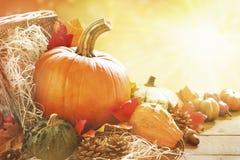 Todavía del otoño vida en luz del sol brillante Imagenes de archivo
