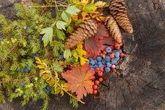 Todavía del otoño vida en un tocón Imagen de archivo