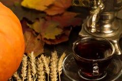 Todavía del té vida con el samovar, calabazas anaranjadas maduras, hojas de arce, trigo en fondo de madera Imágenes de archivo libres de regalías