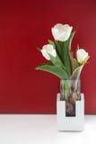 Todavía del tulipán vida blanca Fotos de archivo libres de regalías