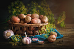 Todavía del verano vida de verduras y del eneldo maduros Fotografía de archivo libre de regalías