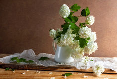 Todavía flores blancas de las ramitas del viburnum del ramo de la vida Fotografía de archivo