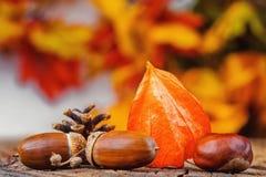 Todavía fondo del otoño de la vida imágenes de archivo libres de regalías