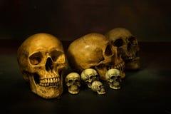 Todavía fotografía de la vida con los cráneos humanos Imagenes de archivo