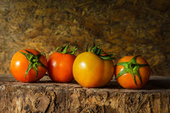 Todavía fotografía del arte de la vida con los tomates Imagen de archivo libre de regalías