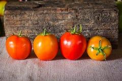 Todavía fotografía del arte de la vida con los tomates Fotografía de archivo libre de regalías