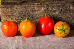 Todavía fotografía del arte de la vida con los tomates Imagenes de archivo