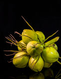 todavía fruta del coco de la carne de la vida Foto de archivo libre de regalías