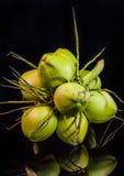 todavía fruta del coco de la carne de la vida Fotos de archivo