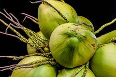 todavía fruta del coco de la carne de la vida Imagen de archivo libre de regalías