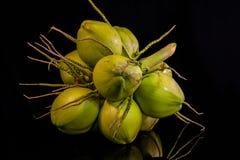 todavía fruta del coco de la carne de la vida Fotos de archivo libres de regalías