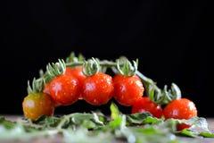 Todavía grupo de la vida de tomate en la madera vieja Imagen de archivo