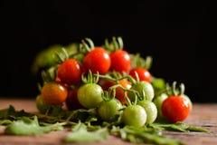 Todavía grupo de la vida de tomate en la madera vieja Foto de archivo libre de regalías