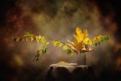 Todavía imagen del concepto del otoño de la vida de las hojas del abedul y del mapa Fotografía de archivo