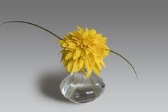Todavía la composición de la vida del florero de cristal y el Heliopsis florecen Fotografía de archivo libre de regalías