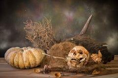 Todavía la vida con el control humano del cráneo seco subió en la boca Fotos de archivo libres de regalías