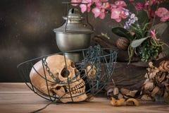 Todavía la vida con el control humano del cráneo seco subió en la boca Fotografía de archivo libre de regalías