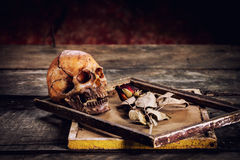 Todavía la vida con el cráneo y las rosas humanos se secó en un marco o Fotos de archivo