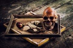 Todavía la vida con el cráneo y las rosas humanos se secó en un marco o Imagen de archivo libre de regalías