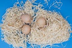 Todavía la vida con el pollo eggs en virutas de madera Imagen de archivo libre de regalías