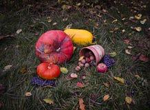 Todavía la vida con la cosecha Halloween del otoño de las calabazas en la hierba del tha, hojas que caían, nueces, salvajes subió Imagen de archivo