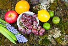 Todavía la vida de la fruta en musgo molió con el conejo y el pájaro, Hyacint Imagen de archivo libre de regalías