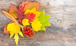 Todavía la vida de las hojas de otoño y de las bayas brillantes de salvaje subió en cuchara de madera en el viejo tablero nudoso  Foto de archivo libre de regalías