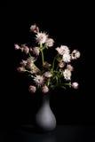 Todavía la vida en negro con un ramo de gran masterwort florece Fotos de archivo libres de regalías