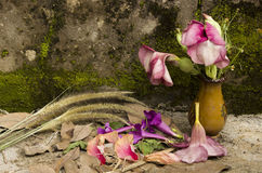 Todavía la vida se descolora flor Fotos de archivo libres de regalías