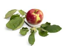 Todavía manzana de la vida y una rama de un Apple-árbol, el ima aislado Fotos de archivo libres de regalías