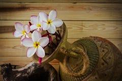Todavía tono del color de la vida del manojo rosado del plumeria de la flor con vagos viejos Fotografía de archivo