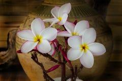 Todavía tono del color de la vida del manojo rosado del plumeria de la flor con vagos viejos Foto de archivo