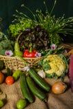 Todavía verduras, hierbas y fruta de la vida. Imagen de archivo