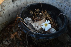Todavía vida 1 Foto de archivo libre de regalías