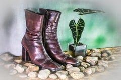 Todavía vida, botas hermosas de la señora Foto de archivo libre de regalías