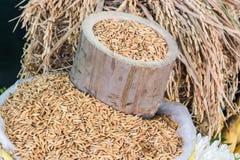 Todavía vida con arroz del bambú del cilindro Imágenes de archivo libres de regalías