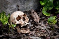 Todavía vida con el cráneo Imagen de archivo libre de regalías