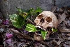 Todavía vida con el cráneo Imagen de archivo