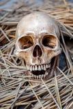 Todavía vida con el cráneo Fotos de archivo