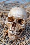 Todavía vida con el cráneo Imagenes de archivo