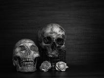 Todavía vida con el cráneo humano y las flores secas Imagenes de archivo
