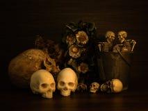 Todavía vida con el cráneo humano y las flores secas Imagen de archivo