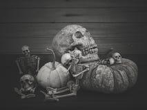 Todavía vida con el cráneo y la calabaza humanos Imagenes de archivo