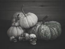 Todavía vida con el cráneo y la calabaza humanos Fotografía de archivo libre de regalías
